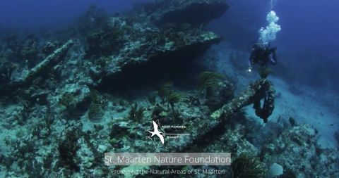 nature foundation st maarten